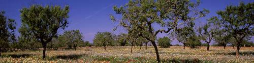 Nature Mallorca