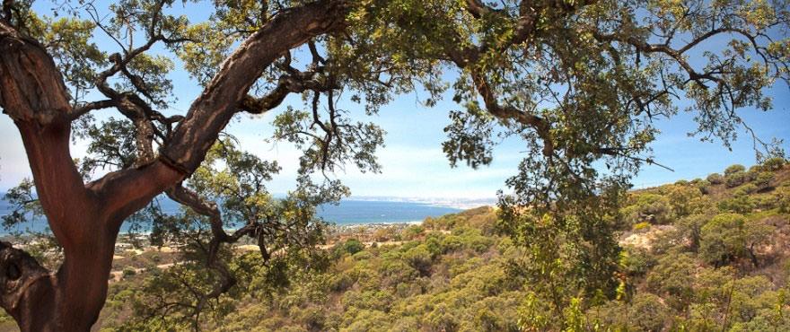 Disfrute las vistas al mar desde La Floresta Sur. A 40 Km del aereopuerto de Málaga
