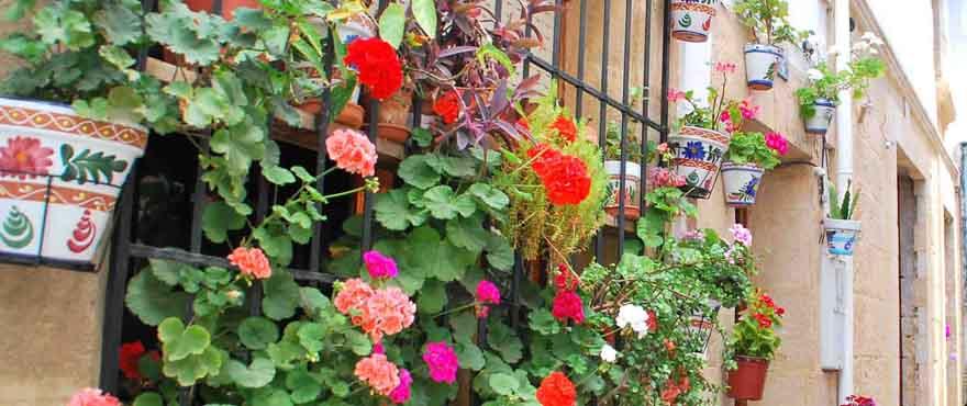 Calle con flores en Jávea, Costa Blanca